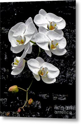 Dew-kissed Cascading Orchids Metal Print by Sue Melvin