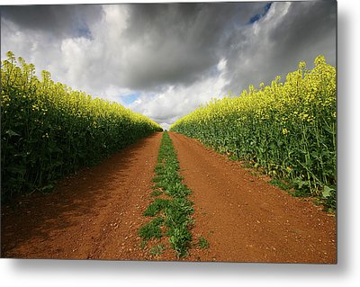 Dirt Track Through Red Soil In A Rapeseed Flower Field Metal Print by Mark Stokes