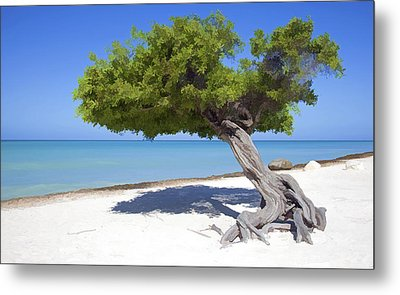 Divi Tree Of Aruba Metal Print by David Letts