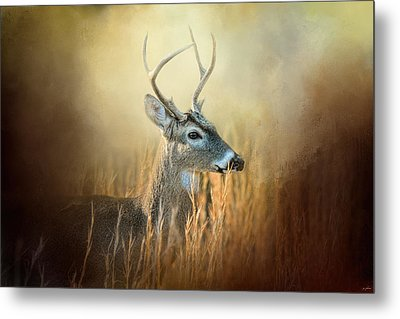 Doe Chasing Metal Print by Jai Johnson