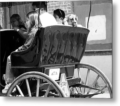 Dog On A Carriage Ride Metal Print by Venus