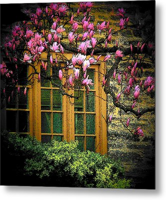 Dogwood In The Spring Metal Print by Joyce Kimble Smith