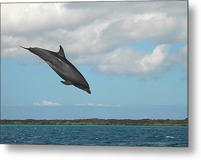 Dolphin Jump Metal Print by Alan Lenk