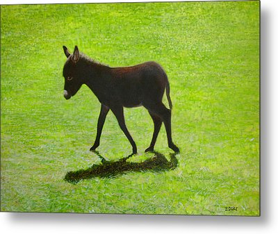 Donkey Foal Metal Print by Eamon Doyle