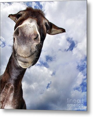 Donkey With Fun Metal Print by Claudia Otte