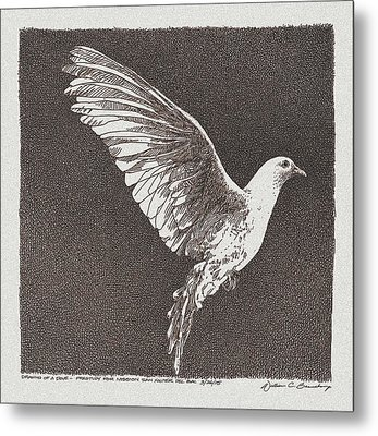 Dove Drawing Metal Print by William Beauchamp