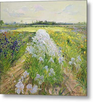 Down The Line Metal Print by Timothy Easton
