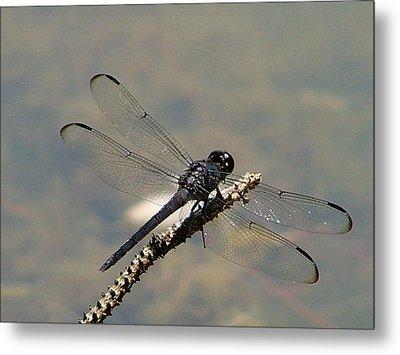 Dragonfly Black Metal Print by Lisa Stanley