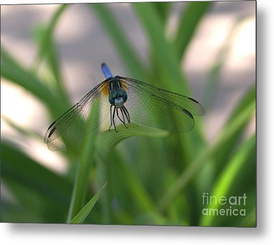 Dragonfly Wit An Attitude Metal Print by Debbie May