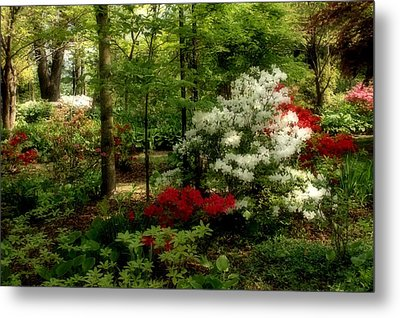 Dreaming Of Spring Metal Print by Sandy Keeton
