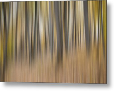 Dreamy Forest Metal Print by Tom Mc Nemar