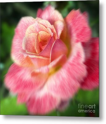 Dreamy Rose Metal Print by Jeannie Burleson