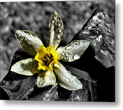 Drenched In Light Metal Print by Karen M Scovill
