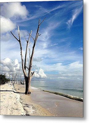 Driftwood At Lovers Key State Park Metal Print by Janet King