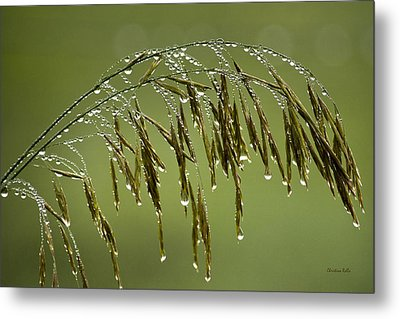 Drops Of Water On Grass Metal Print by Christina Rollo