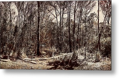 Dry Autumn Landscape Of A Vintage Woodland Metal Print by Jorgo Photography - Wall Art Gallery