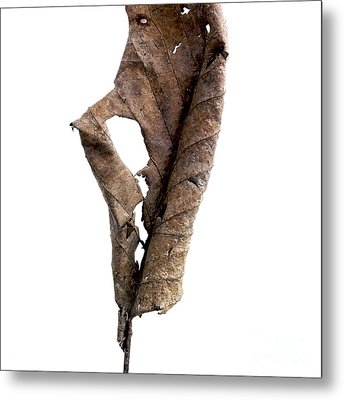 Dry Leaf Metal Print by Bernard Jaubert