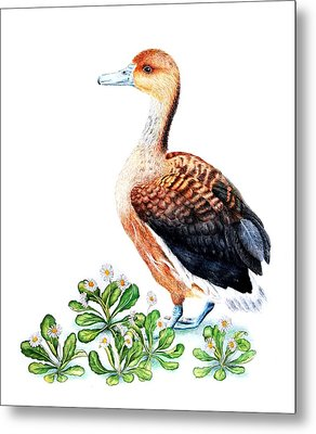 Duck And Daisies Metal Print by Sandra Moore