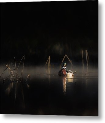 Duck Of The Morning Mist Square Metal Print by Bill Wakeley