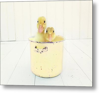 Duck Soup - Yellow Version Metal Print by Amy Tyler