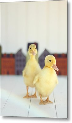 Ducks In The Neighborhood Metal Print by Amy Tyler