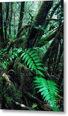 Dwarf Forest El Yunque Metal Print by Thomas R Fletcher