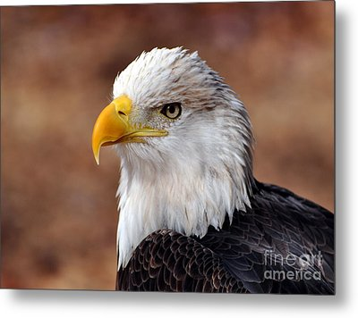 Eagle 25 Metal Print by Marty Koch