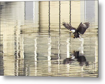 Eagle Abstract Metal Print by Idaho Scenic Images Linda Lantzy