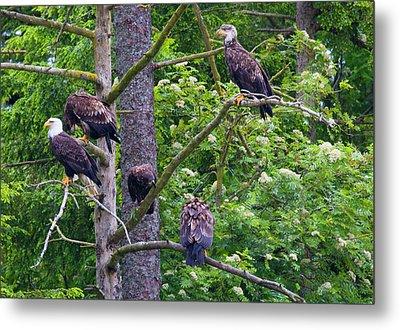 Eagle Tree Metal Print by Mike  Dawson