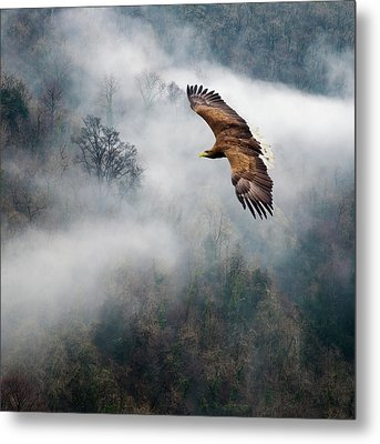 Eagles Dare Metal Print by Ian David Soar