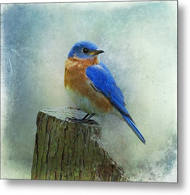 Eastern Bluebird II Metal Print by Sandy Keeton