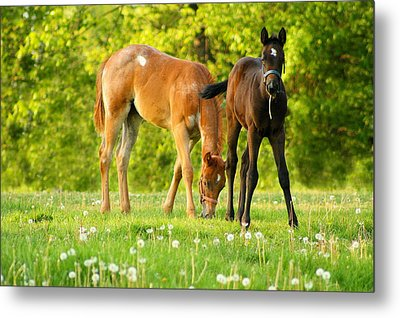 Easy Pickins Metal Print by Angela Rath