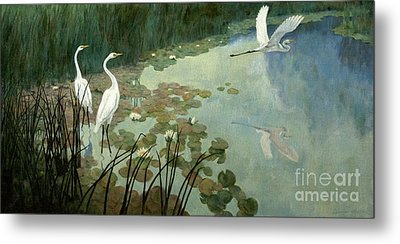 Egrets In Summer Metal Print by Celestial Images