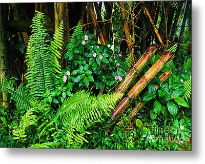 El Yunque National Forest Ferns Impatiens Bamboo Mirror Image Metal Print by Thomas R Fletcher