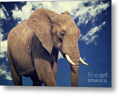 Elefanten Portrait Metal Print by Angela Doelling AD DESIGN Photo and PhotoArt