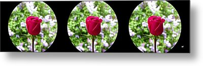 Elegant Rose Trio 1 Metal Print by Will Borden