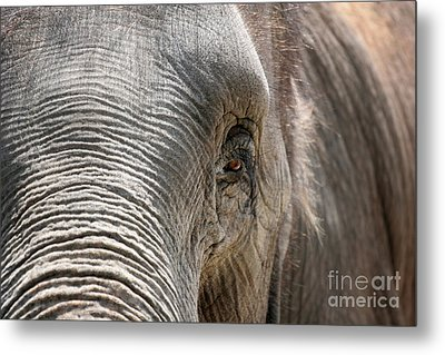 Elephant Eye Metal Print by Jeannie Burleson