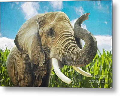 Elephant In The Cornfield Metal Print by Angela Doelling AD DESIGN Photo and PhotoArt
