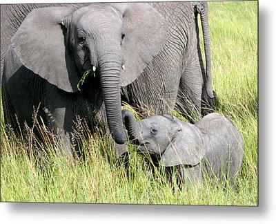 Elephants - Little Sister Metal Print by Nancy D Hall