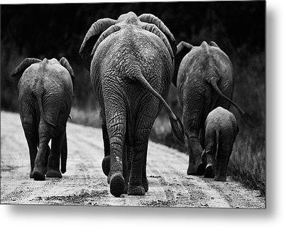 Elephants In Black And White Metal Print by Johan Elzenga