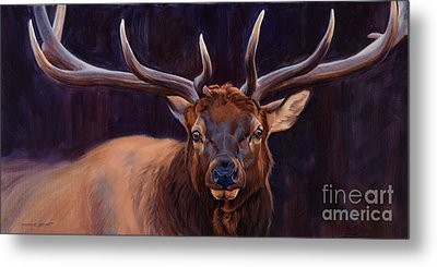 Elk Study Metal Print by Michelle Grant