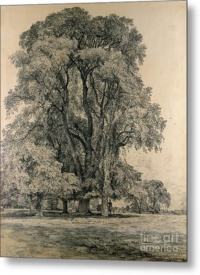 Elm Trees In Old Hall Park Metal Print by John Constable