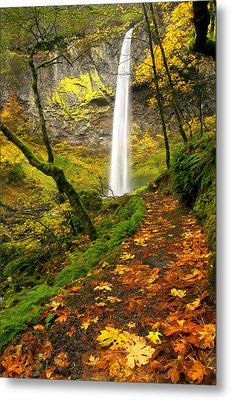 Elowah Autumn Trail Metal Print by Mike  Dawson