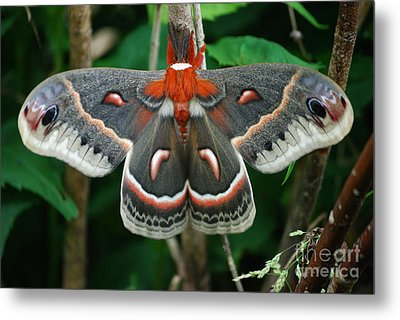 Emergence Metal Print by Randy Bodkins
