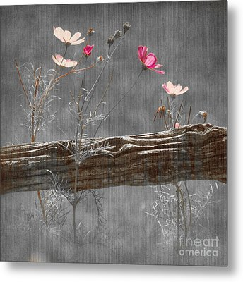 Emerging Beauties - V38at1 Metal Print by Variance Collections