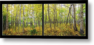 Enchanting Forest Metal Print by James BO Insogna