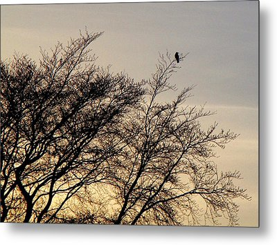 End Of Day Metal Print by Roberto Alamino