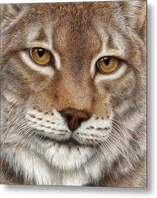 Eurasian Lynx Metal Print by Pat Erickson