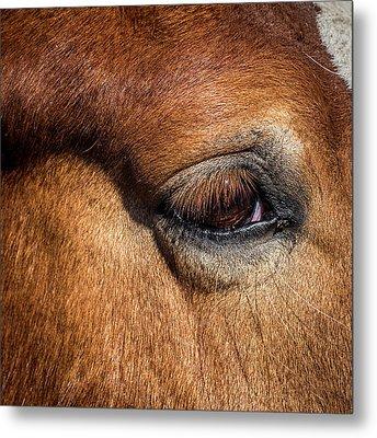 Eye Of The Horse Metal Print by Paul Freidlund
