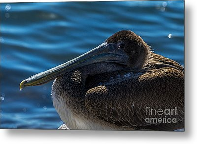 Eye To Eye Metal Print by Marvin Spates